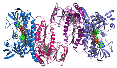 800px-Argonne's_Midwest_Center_for_Structural_Genomics_deposits_1,000th_protein_structure